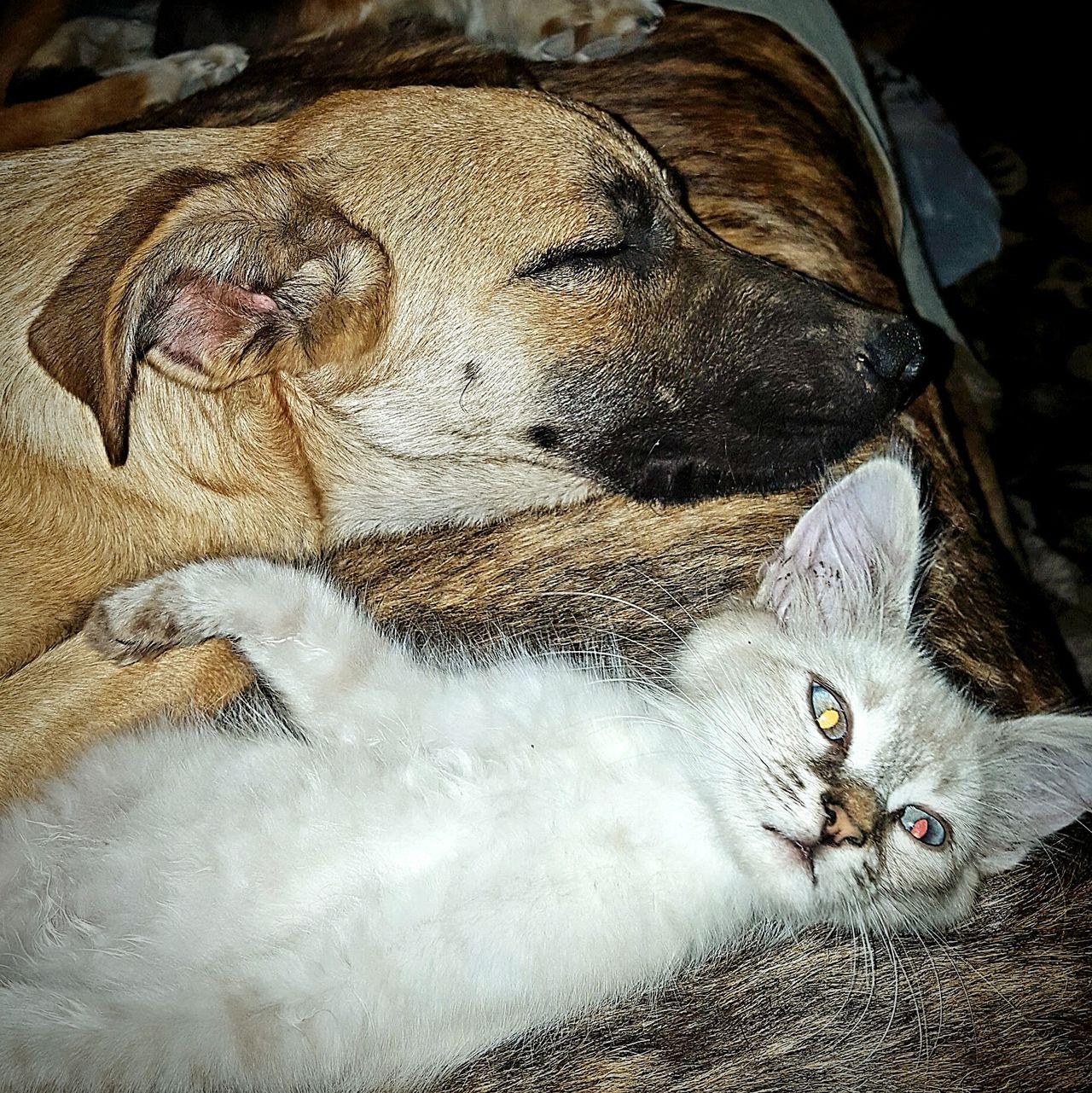 Dog Cat Pets Animals Sleeping Sleepy Friends Nap Dog And Cat Pet Love Pets Sleeping Kitten Puppy Kitty Kitty Cat Doggy