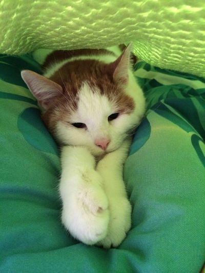 Katze Domestic Cat First Eyeem Photo EyeEmNewHere