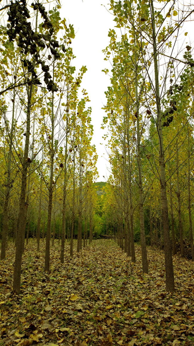 Autumn Backlit Day Grass Green Green Color Landscape Light Nature Nature Nature_collection Relaxing Moments Tree Yellow