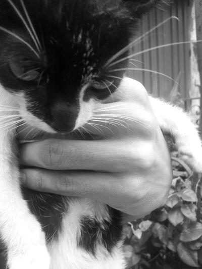 """Leave me alone."" said the Cat. Streetphotography Blackandwhite Monochrome"