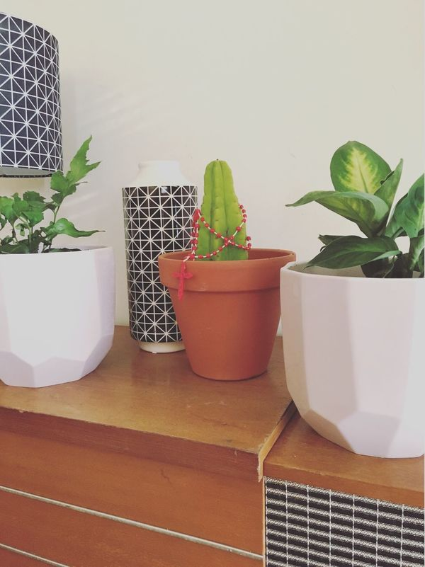 Pot Plant Cactus San Pedro Planter Mid Century Modern Mid Century