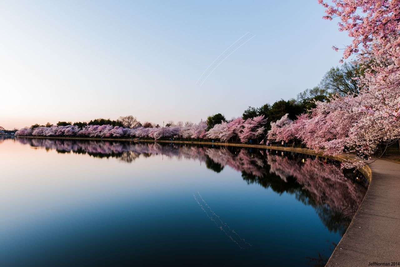 Mirror like Tidal Basin and the cherry blossoms