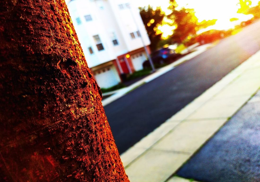 """""""Bark in bokeh during sunset..."""" Car Street Road Day Transportation No People Outdoors Red Built Structure Close-up Building Exterior Architecture City Sky Nature Sunset Personal Fave My Style... Multi Colored Detailphotography Outofthewayangles Purist No Edit No Filter As Shot Mobile Photography Unedited"""