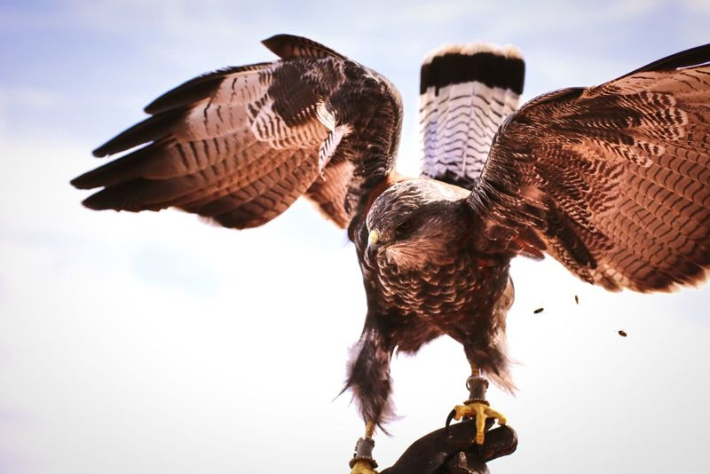 A beautiful hawk in Selwo Aventura (Málaga/ Spain) Open Edit Hawk My Best Photo 2014 Animals The Five Senses