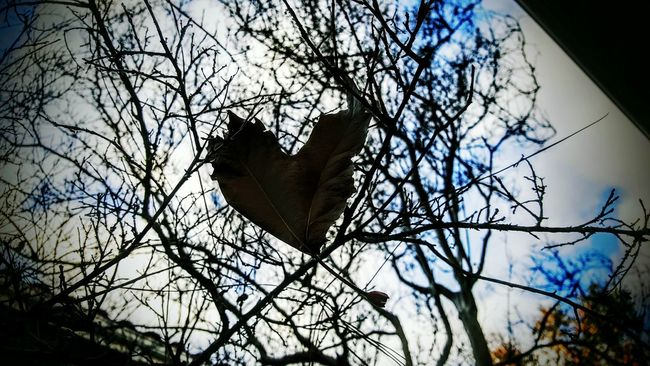 Only one leaf but full of love Heart Heart Leaf Tree_collection  Twigs Winter Leaves_collection One Falling Caught In The Moment Sky Lovers Shapes In Nature  Nature Love Valentine's Day  Be Mine Imagine The Great Outdoors - 2016 EyeEm Awards