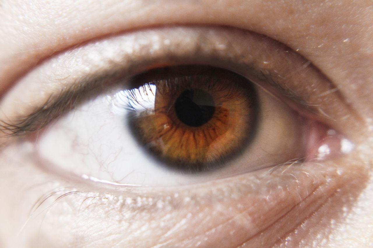 human eye, eyelash, human body part, close-up, eyesight, one person, real people, eyeball, looking at camera, sensory perception, iris - eye, portrait, women, indoors, day, people
