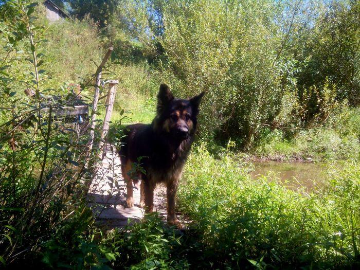 Dog Terrible Dog Fearful Dog Glummy Dog Dangerous Dog