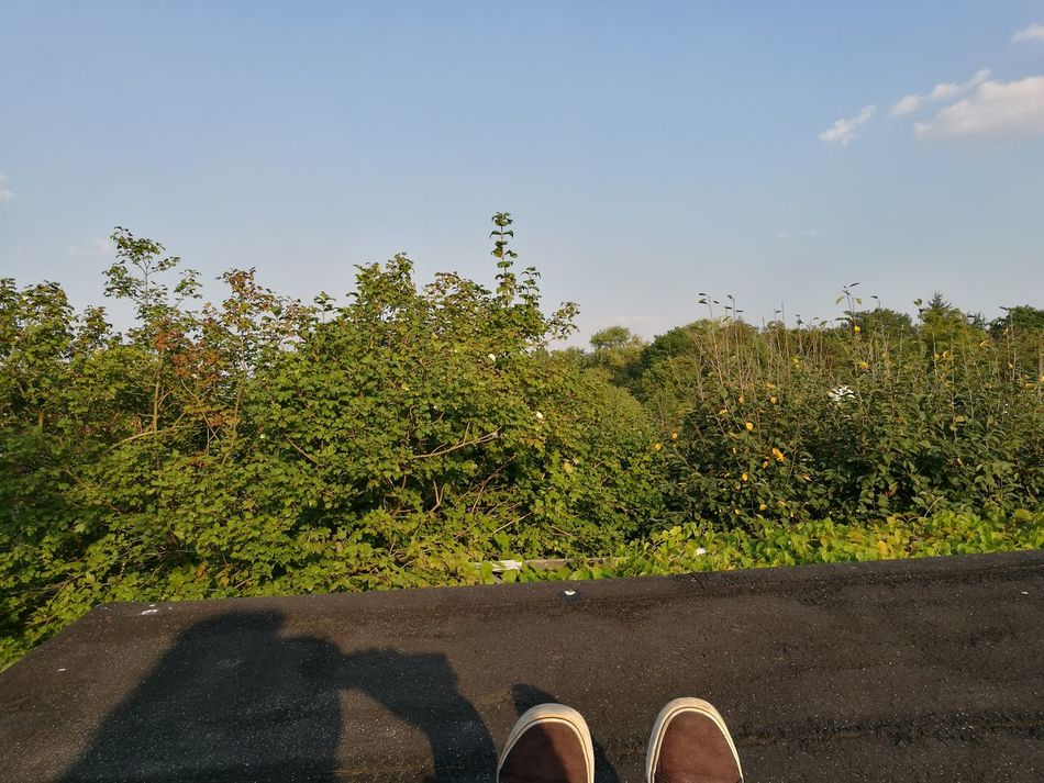 On Roof Chilling Relaxing Enjoying Life Natural Photography Smartphonephotography Amazing Nature Natural Beauty Nature Wildlife Harmony