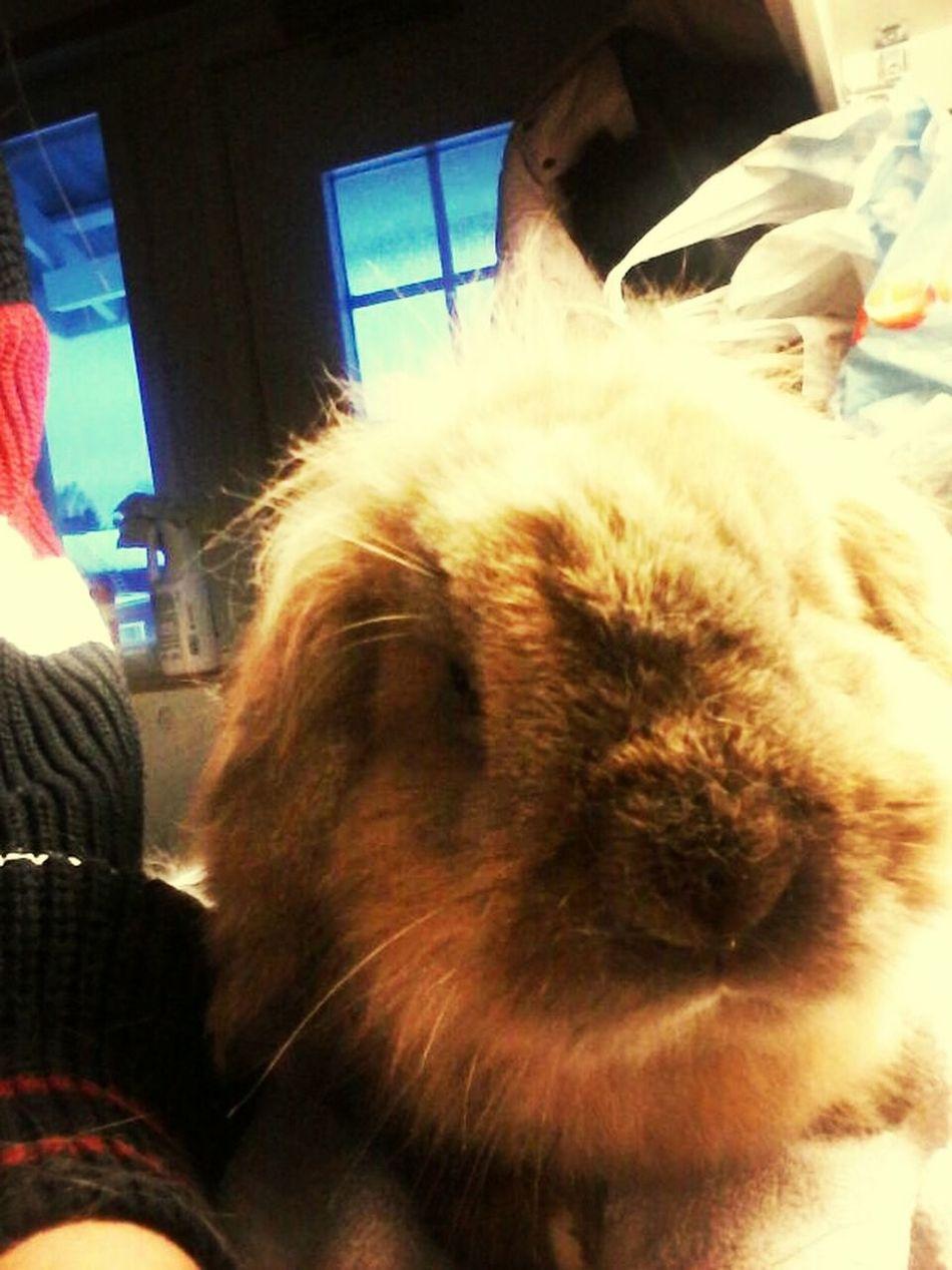 Mr Rabbit Cute Pets Cuteness Sweetheart