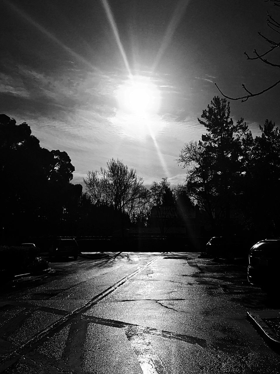 sun, tree, sunlight, car, transportation, outdoors, no people, silhouette, day, sky, nature