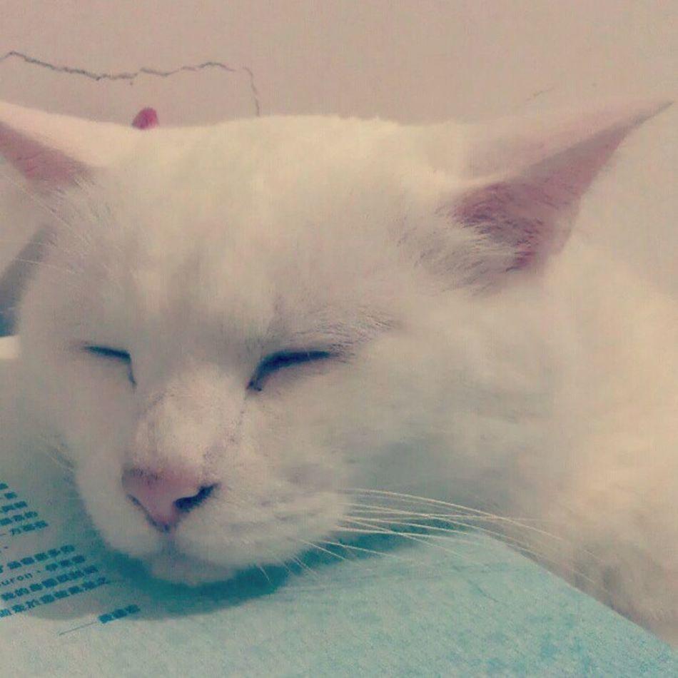 Whitecat Myhairykid
