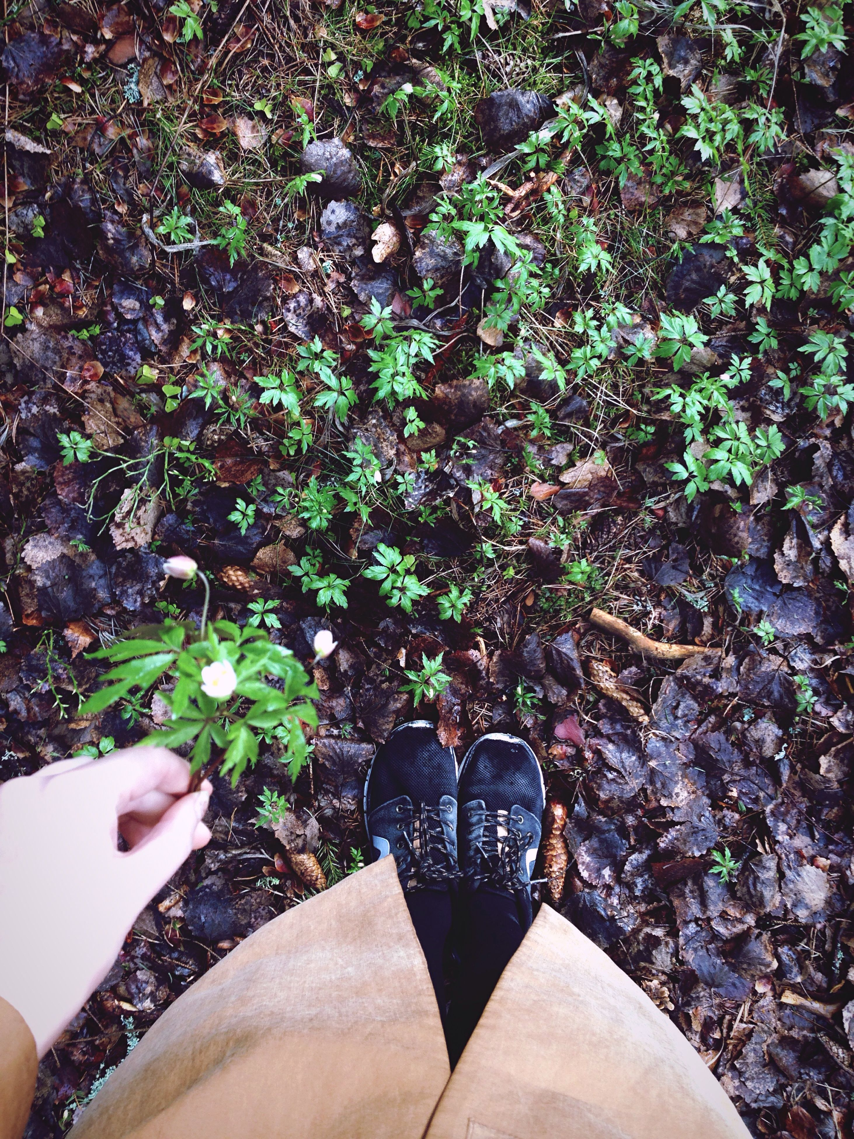 low section, personal perspective, person, lifestyles, shoe, leisure activity, human foot, high angle view, part of, men, standing, unrecognizable person, footwear, leaf, plant