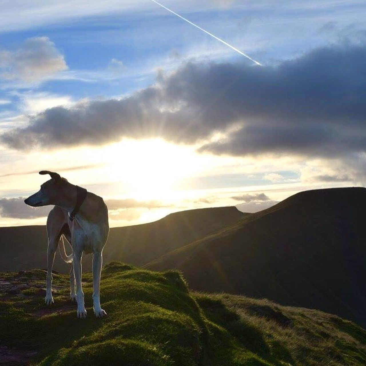 Dogs And Sunshine Brecon Beacons National Park Lurcher Walking The Dogs Sun And Mountains Sunlight Winter Sun