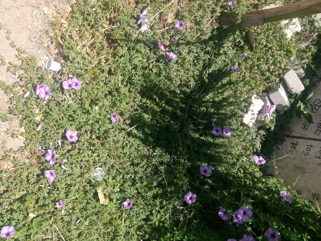 flower, growth, plant, nature, high angle view, day, fragility, beauty in nature, outdoors, no people, purple, freshness, flower head