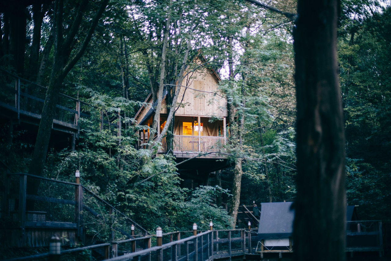 Adventure Camping Explore Forest Garden Hidden Home House Nature Outback Outdoors Quiet Sea Secret Secret Garden Tent Tranquility Tree Treehouse Treehouseview WoodLand WoodLand Woodlands Woods Camp