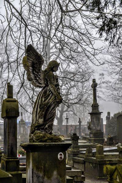 Warsaw Poland Warszawa  Cmentarz Statue Cemetery Tombstone Sculpture Bare Tree Memorial Religion Spirituality Grave Tree Day No People