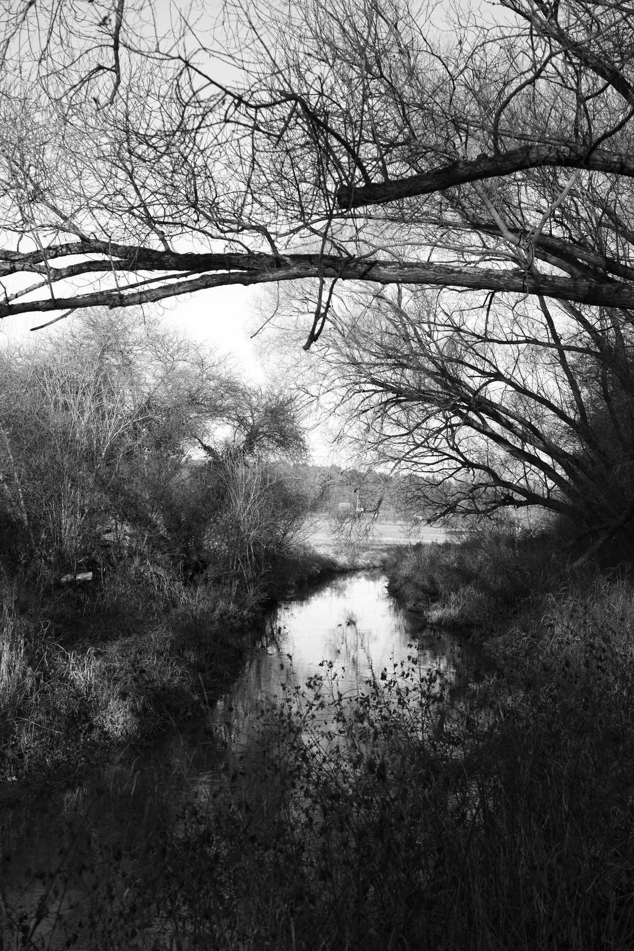 Schwarzbach Bare Tree Beauty In Nature Black & White Black And White Blackandwhite Photography Branch Day Grass Growth Nature No People Non-urban Scene Outdoors Reflection River Scenics Sky Tranquil Scene Tranquility Tree Water Wilderness Willow Tree
