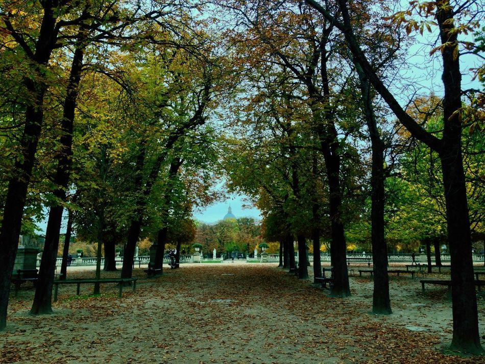 Paris Jardin Du Luxembourg Sénat Automne Début d'automne à Paris