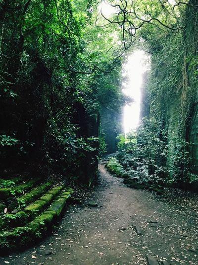 ジブリの世界 Green Natural Peace And Love Retro Beautiful Nature Beautiful