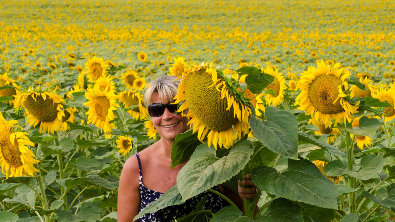 Beautiful stock photos of sunflower, 50-54 Years, Agriculture, Beauty In Nature, Caucasian Ethnicity