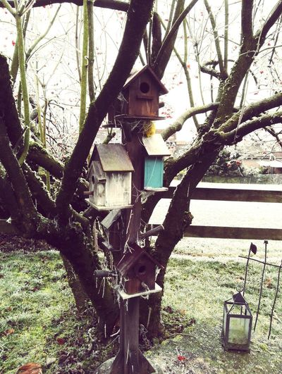 Gelė Froid☔❄🍵 Outdoors Garden Bird House