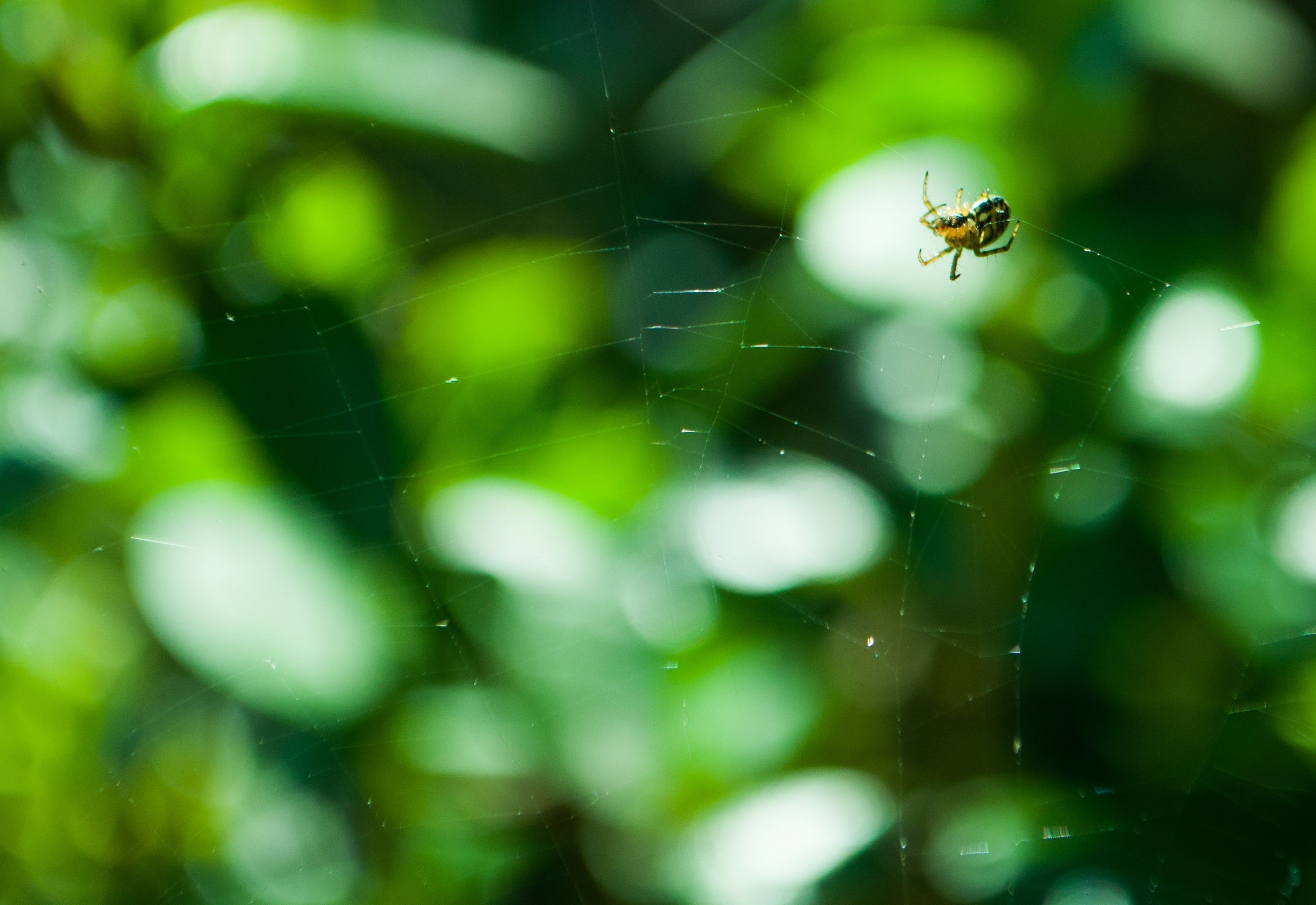 animal themes, animals in the wild, insect, one animal, wildlife, spider, focus on foreground, selective focus, spider web, close-up, two animals, flying, nature, zoology, day, no people, outdoors, full length, animal wildlife, mid-air