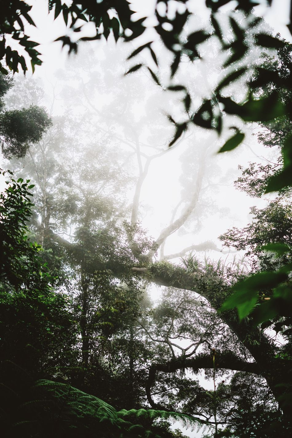foggy forest on the way to Wae Rebo Tree Nature Beauty In Nature Forest Branch Plant Leaf Outdoors Day No People Rainforest Jungle Green Moss Foggy Misty Magic Fairytale  Ferns Lush Greenery Vegetation INDONESIA Flores Southeastasia Trekking