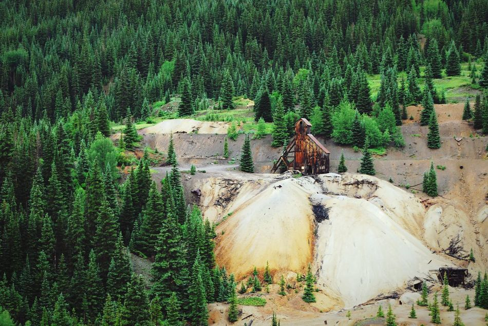 """""""Forest Gold"""" Tailings from the historically famous 'Yankee Girl Mine' near Ouray, Colorado, dominate an otherwise thickly forested landscape. Tree Landscape Green Color Mountain Mining Mining History Of America Colorado Colorado Photography Colorado Mountians OurayColorado Silvermine GoldMine"""