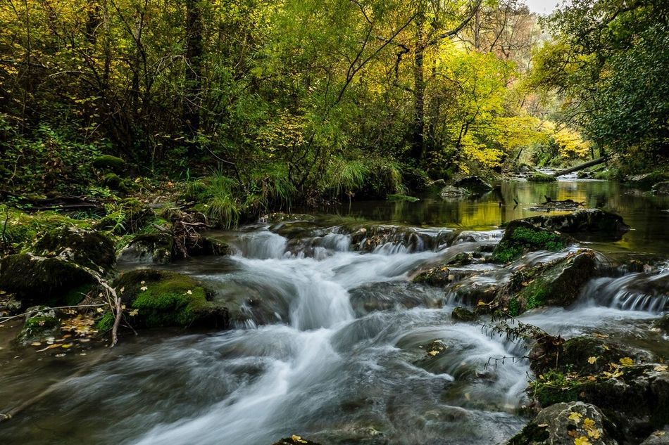 Automne en Provence Water Nature Environment Forest Flowing Water Tranquil Scene