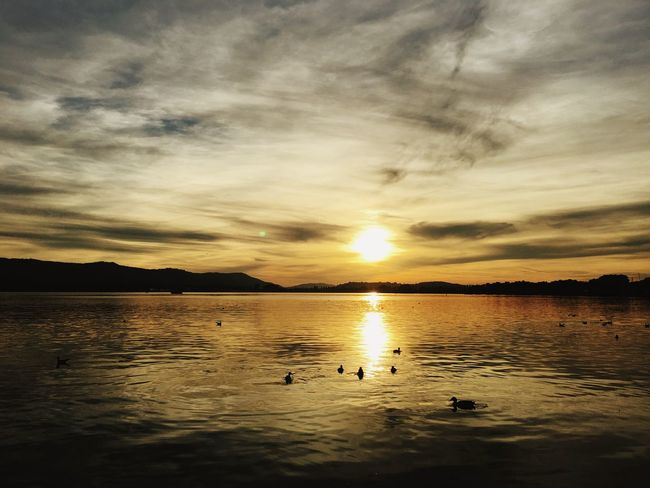 Sunset Bird Animal Themes Animals In The Wild Wildlife Water Swimming Tranquil Scene Sun Tranquility Scenics Reflection Beauty In Nature Waterfront Orange Color Nature Cloud - Sky Idyllic Sky Flying Lake Of Constance Bodensee
