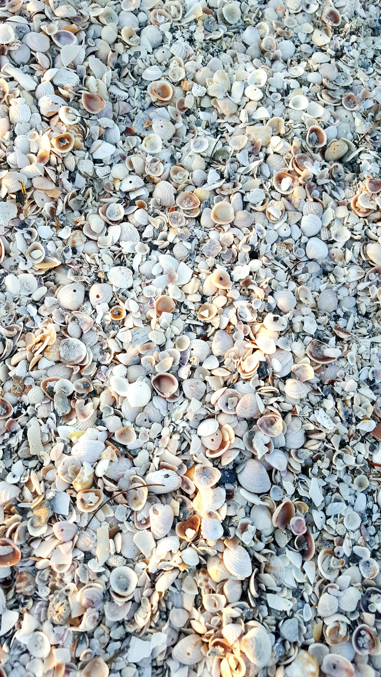 She sells seashells on the seashore.... Shells Beach Shells Sand Broken Shells Nature Gulf Of Mexico Saltlife Seashells Florida