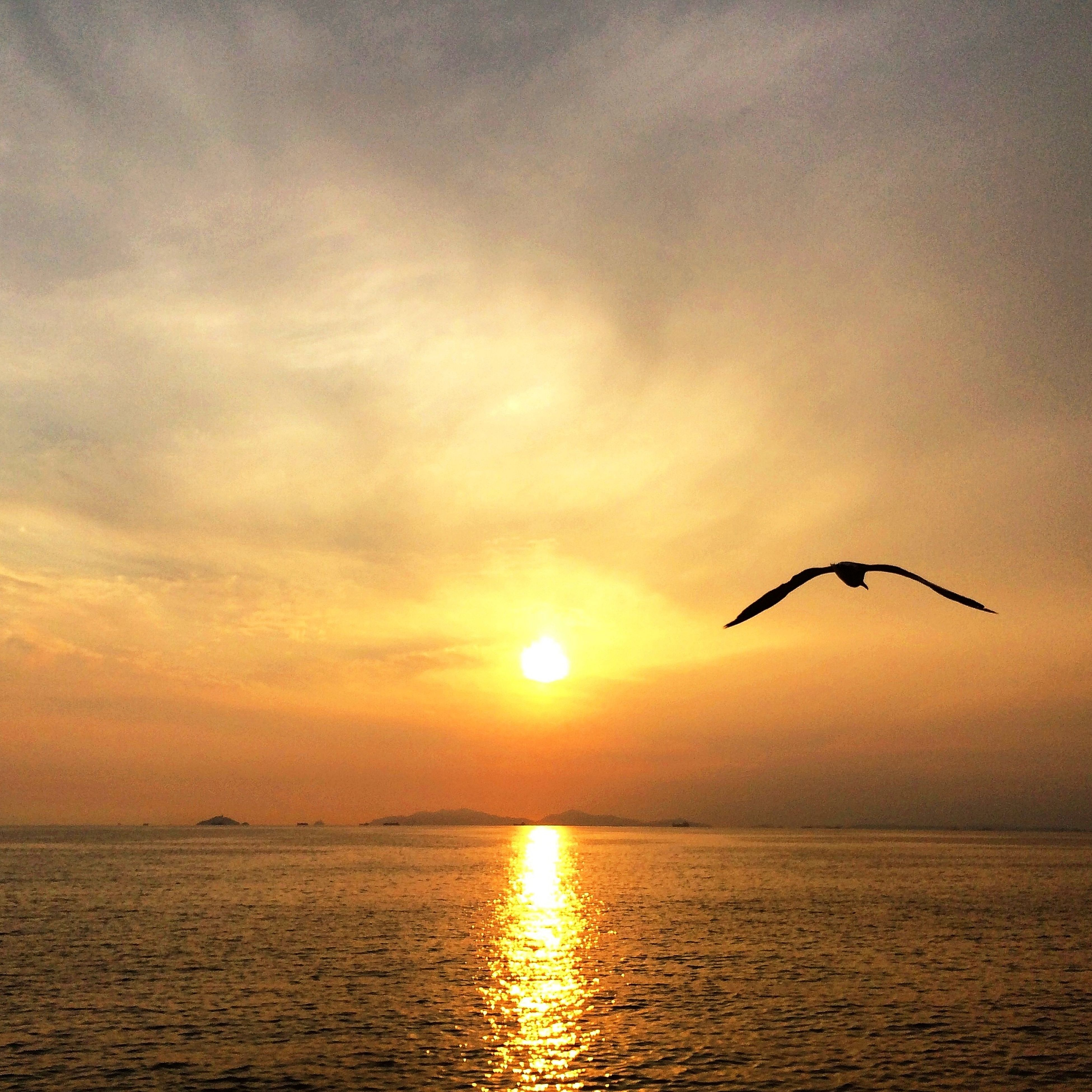 sunset, sea, water, horizon over water, sun, waterfront, orange color, scenics, sky, animal themes, flying, bird, beauty in nature, tranquil scene, tranquility, silhouette, animals in the wild, wildlife, one animal, nature