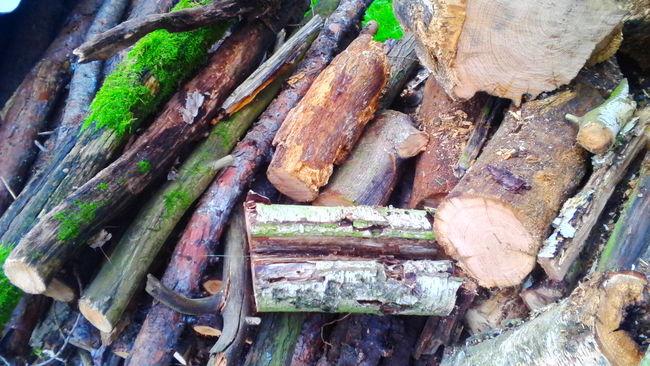 Wood! Wood Nature