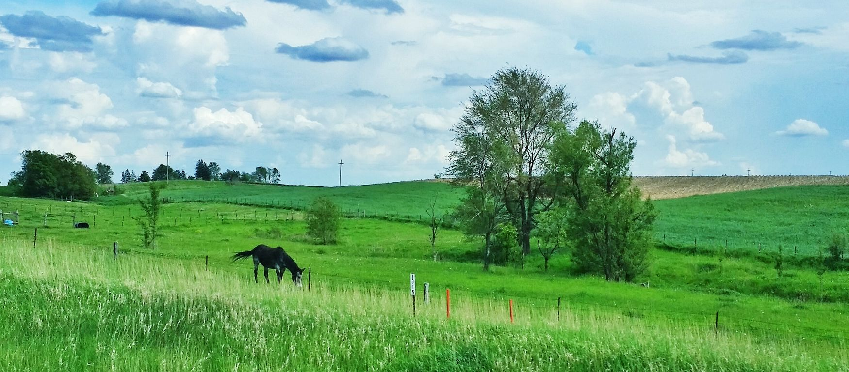 Country Life Horses Landscape Photography Iowa