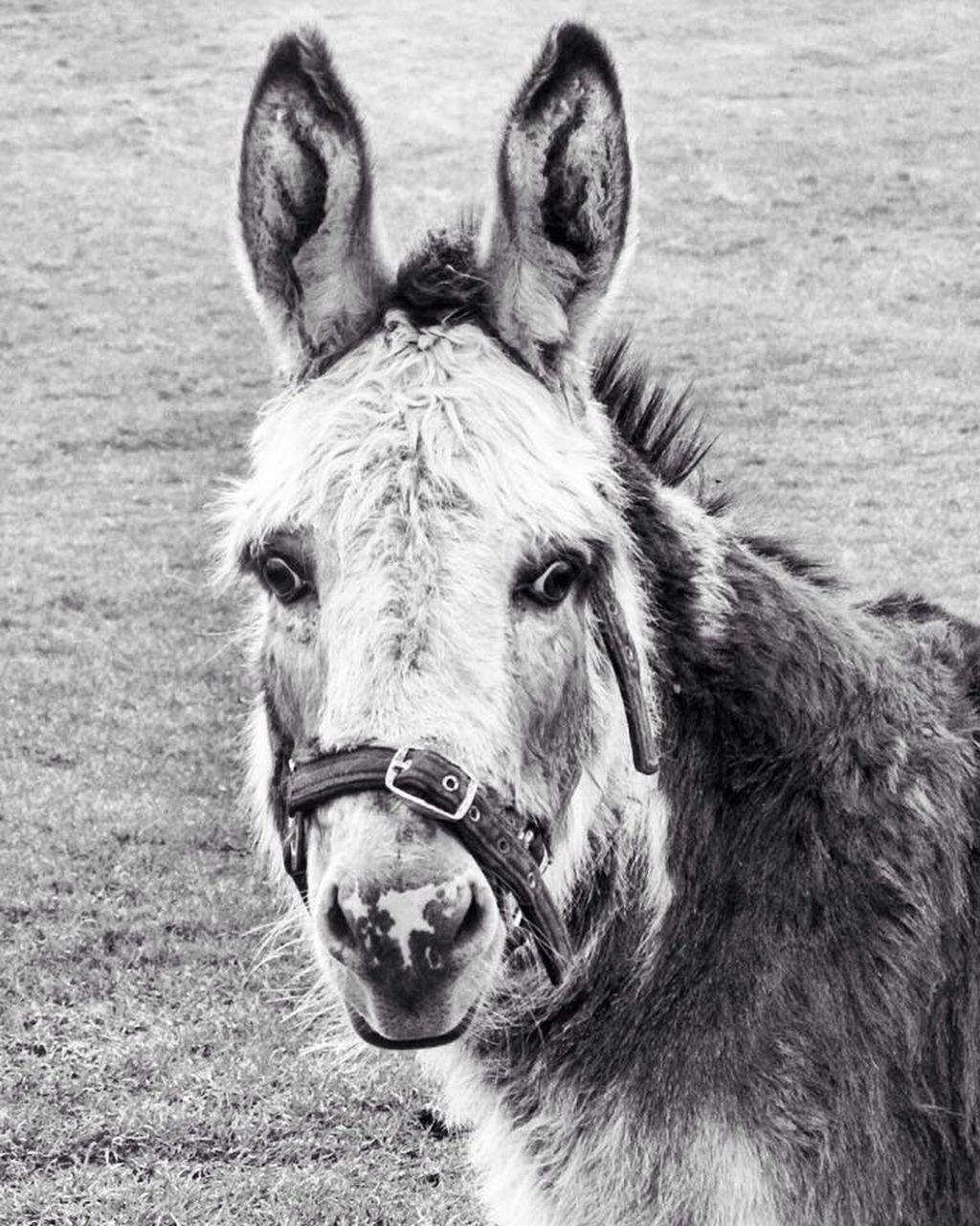 one animal, animal themes, horse, domestic animals, mammal, animal head, day, portrait, no people, outdoors, close-up, nature