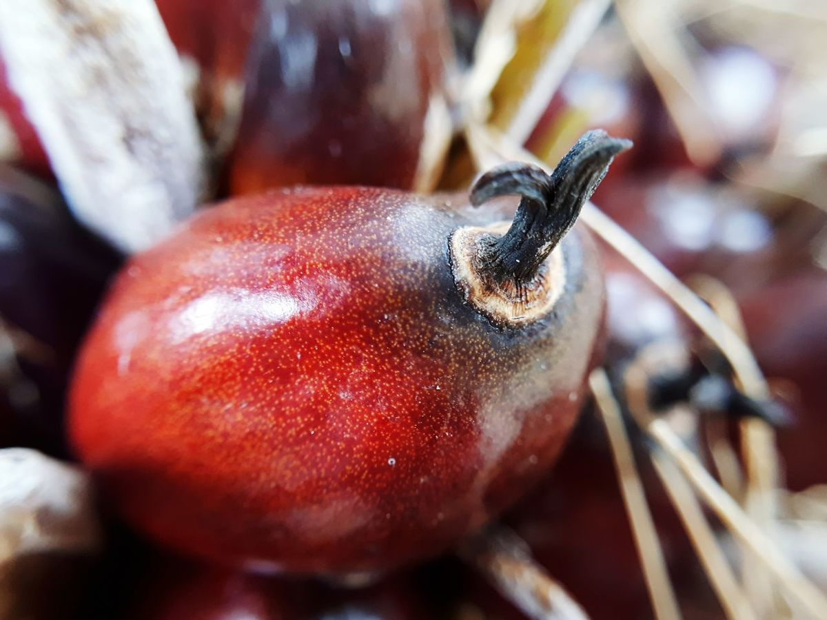 EyeEm Selects Palm Oil Fruit Close-up No People Food Day Indoors  Freshness Orange Ripe Fruit Farm Life Oil Pickup