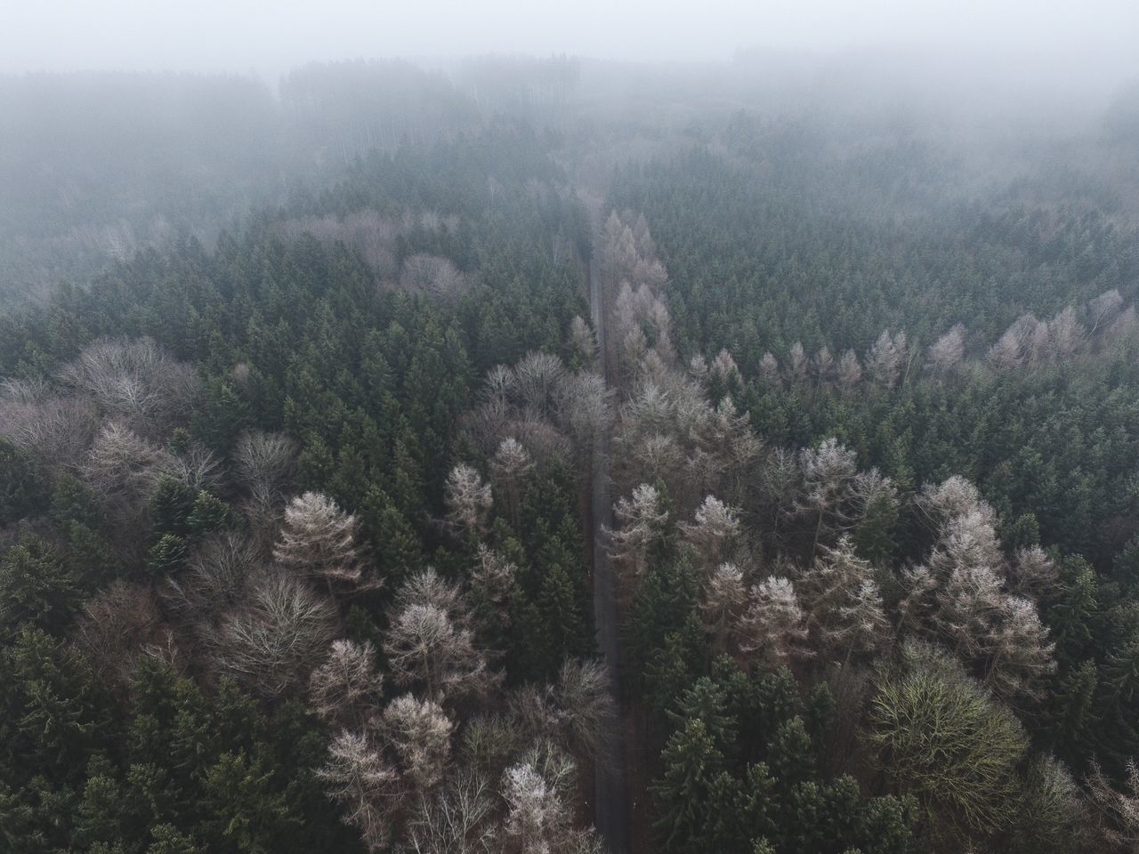 Tree Nature Growth Scenics Outdoors Beauty In Nature Aerial View No People Sky Treetop Day