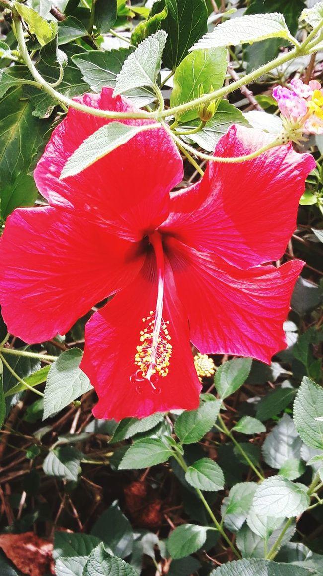 Exotic Flowers Butterflyfarm Cornwall Butterfly Garden