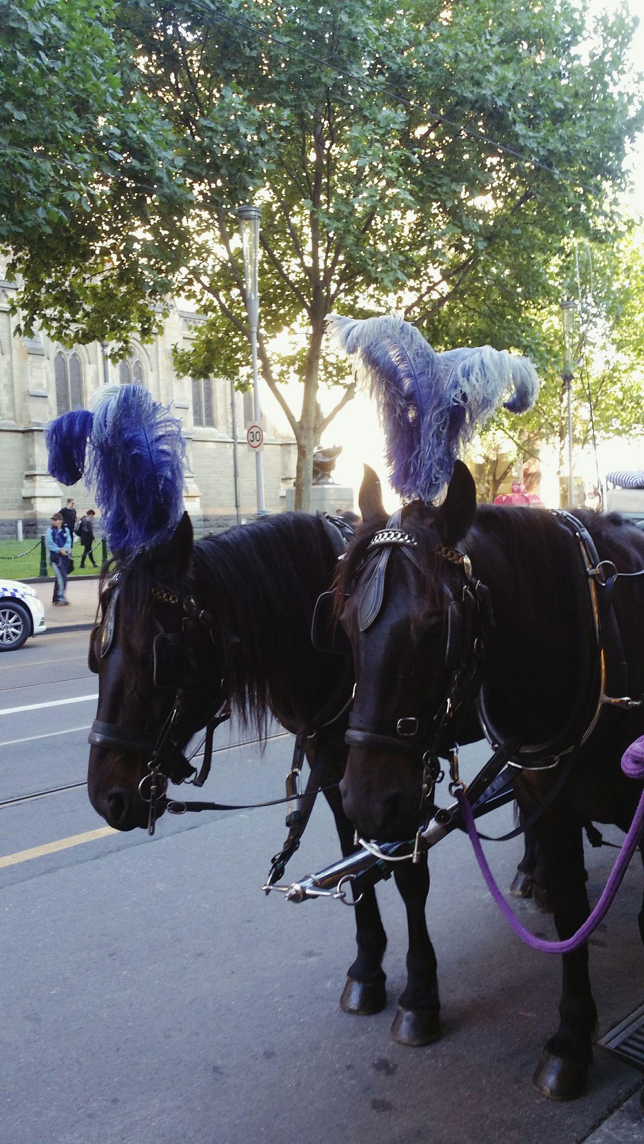 Flinders St #Melbourne I Love Horses