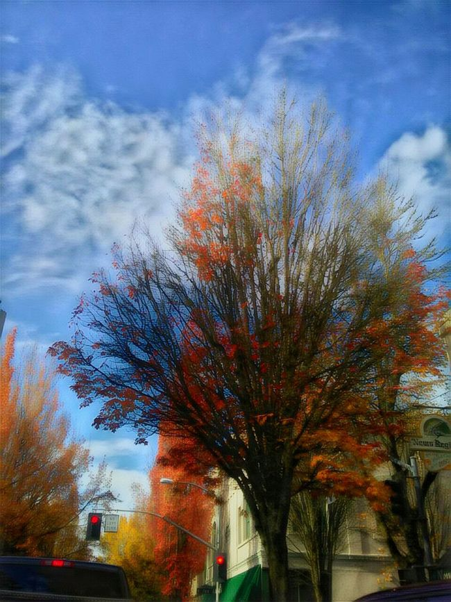 This one is one of my personal favorites!!!Cloud - Sky The Way Forward The Week On EyeEem Travel Idyllic Illuminated Outdoors Photograpghy  Beauty In Nature Multi Colored EyeEm Photo Of The Day Vibrant Color Dramatic Sky Outdoors Tranquility Atmosphere Growth 3rd Street Essence Of Fall October Afternoon Fall Colors Small Town America Historic Downtown Harvest Time Growth Tree
