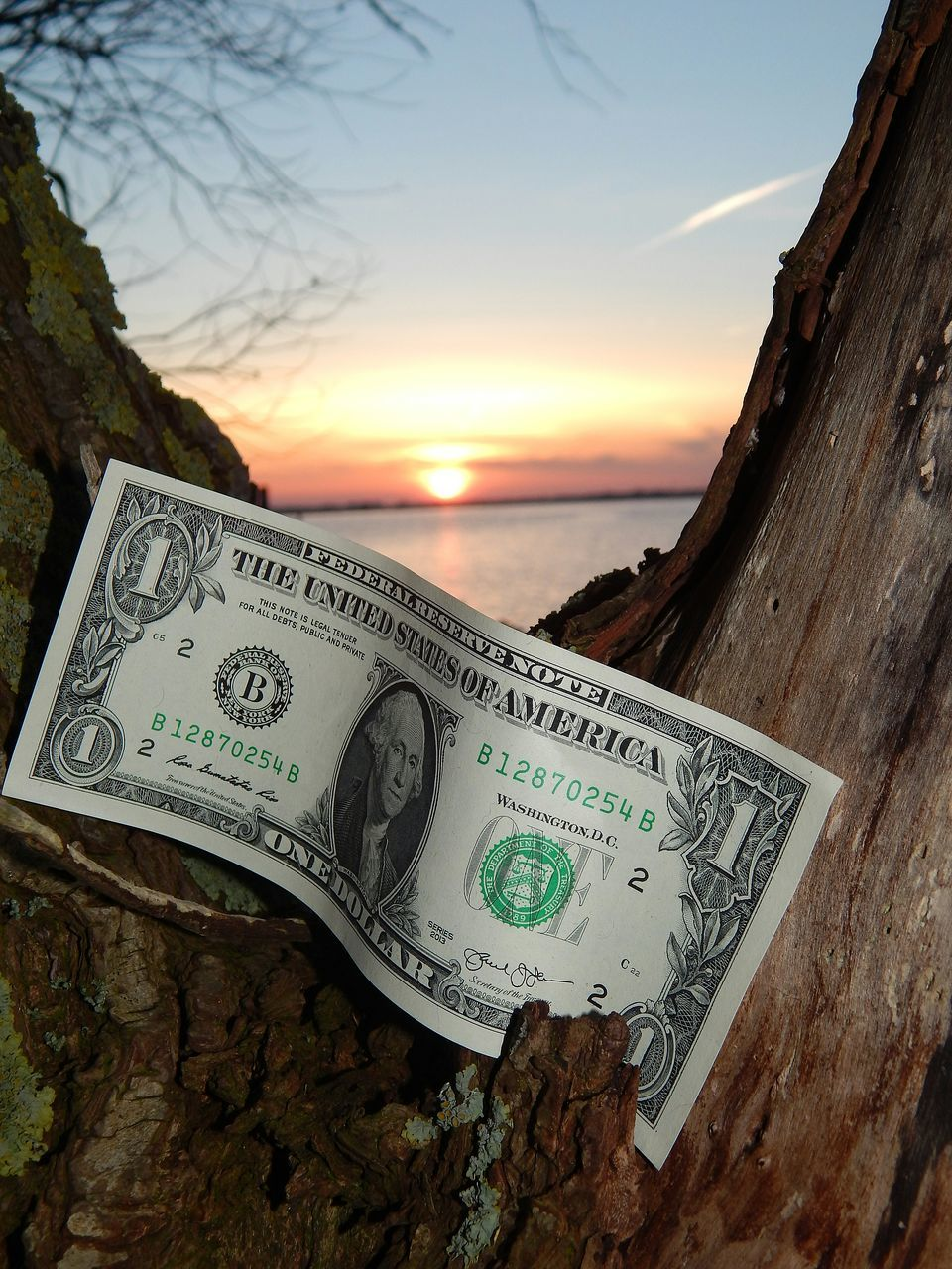text, communication, paper currency, close-up, currency, no people, sea, water, tree, outdoors, sky, sunset, nature, beauty in nature, day