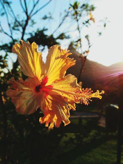 JéssicaCaroline 📷❤ Flower Fragility Nature Flower Head Beauty In Nature LoveNature Lovephotos