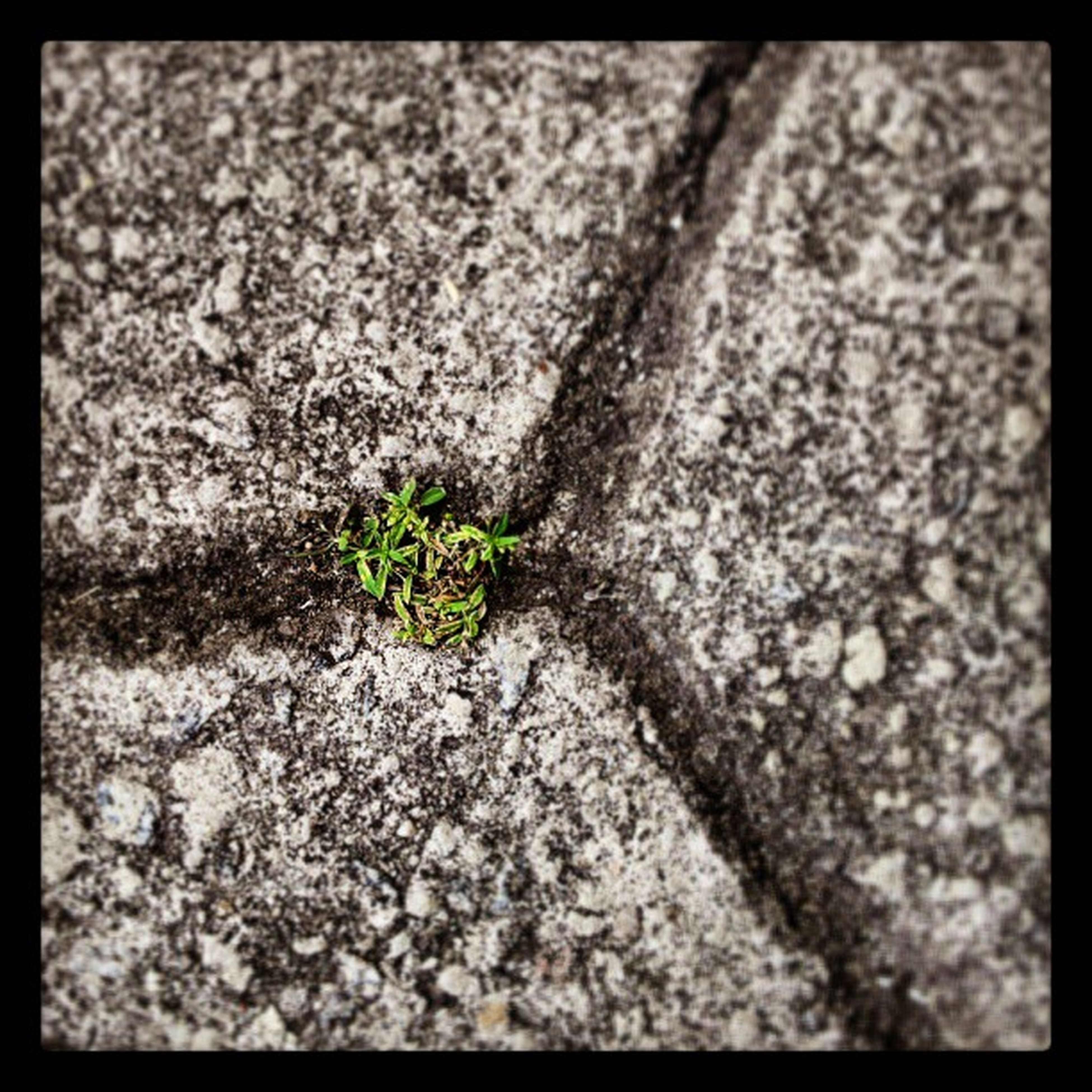 transfer print, auto post production filter, textured, high angle view, rough, growth, close-up, nature, plant, ground, rock - object, day, outdoors, no people, cracked, full frame, leaf, moss, backgrounds, growing