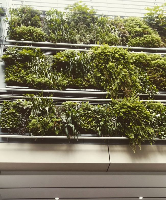 Plants Plantart Hangingplants Britomart Britomart Auckland Auckland Newzealand