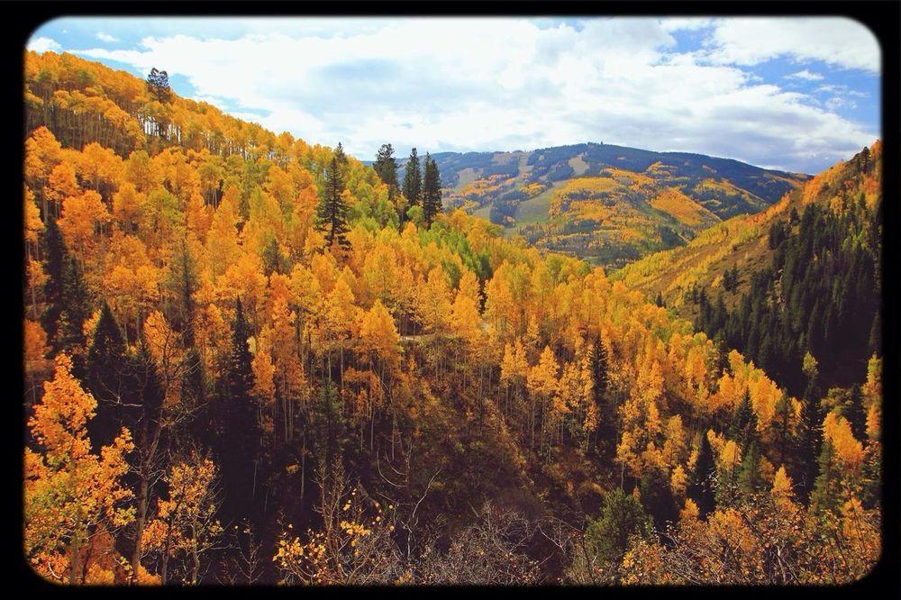 Landscape_Collection Foliage Tadaa Community Eye Em Nature Lover
