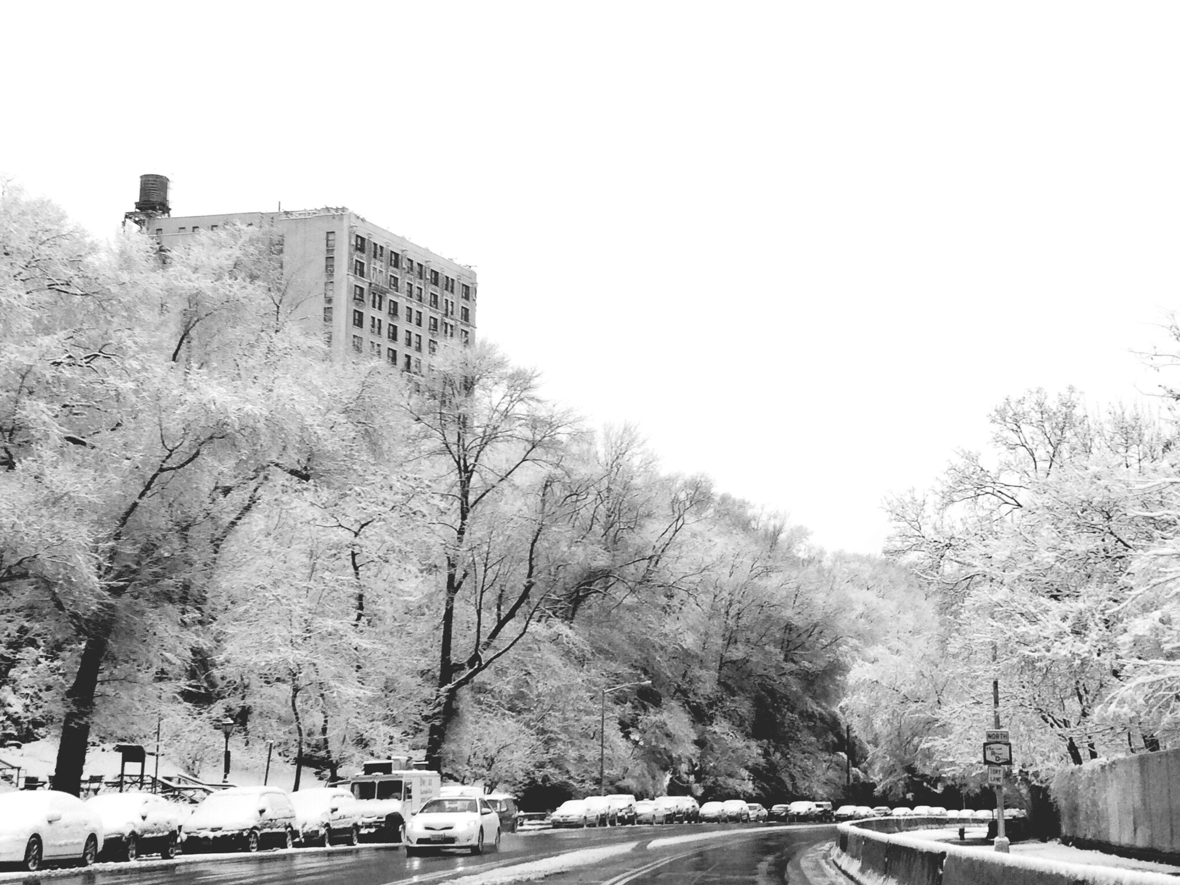 First Eyeem Photo Snow Harlem  Sugar Hill Winter Winter Trees Cold