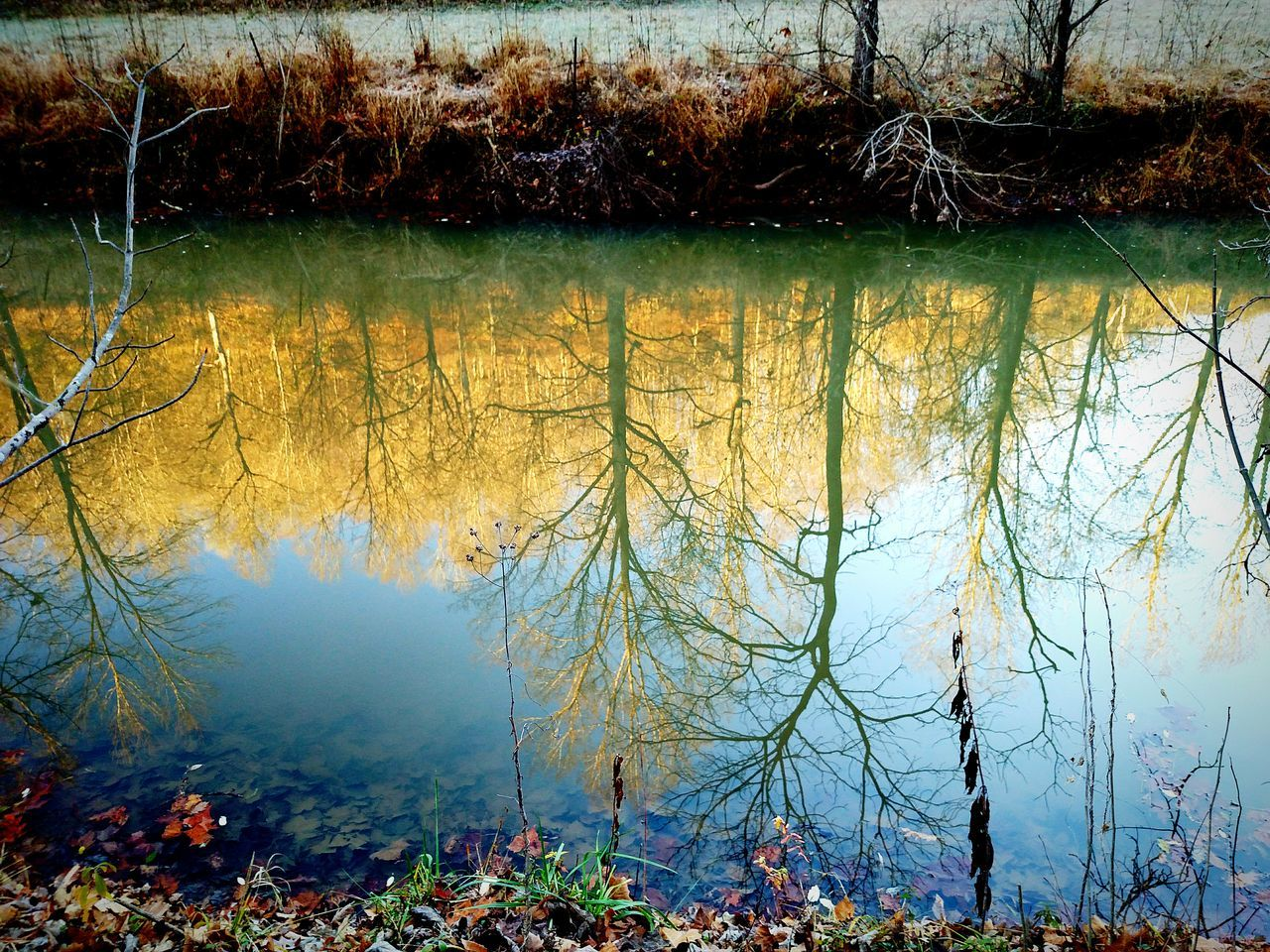 Morning Light Trees Treeline Water Reflection Water Frosty Mornings Beautiful Nature Nature EyeEm Nature Lover Colors Beautiful Colors Check This Out Taking Photos Sky And Trees Interesting Creek Streams Sunlight And Shadow EyeEm Best Shots Beautiful Sky Mobilephotography West Virginia Exploringpaidoff