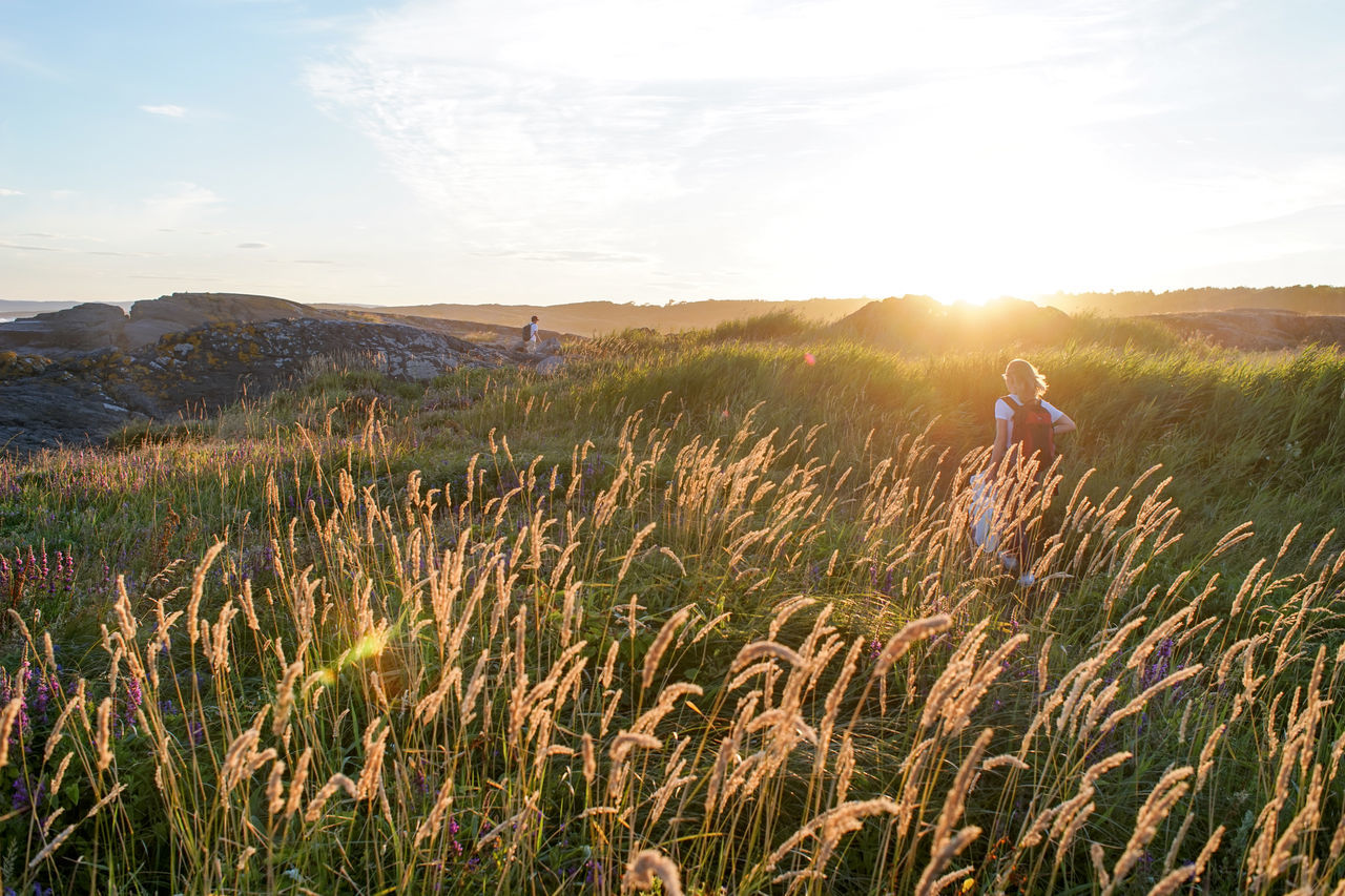 No caption Grass Grass Idyllic July Landscape Nature Nature Nevlunghavn Norway Reeds Sky Sun Sunbeam Sunlight Sunset Sunset_collection Vestfold 43 Golden Moments Colour Of Life Colors and patterns Live For The Story