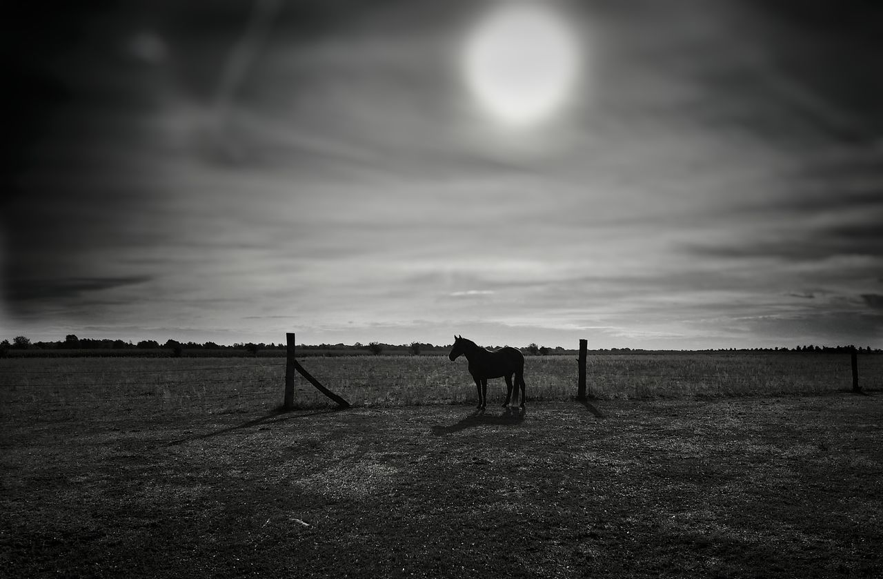Animal Themes AntiM Beauty In Nature Blackandwhite Cloud - Sky Day Horse Landscape Mammal Melancholic Landscapes Nature No People Only Men Outdoors People Scenics Single Horse Sky