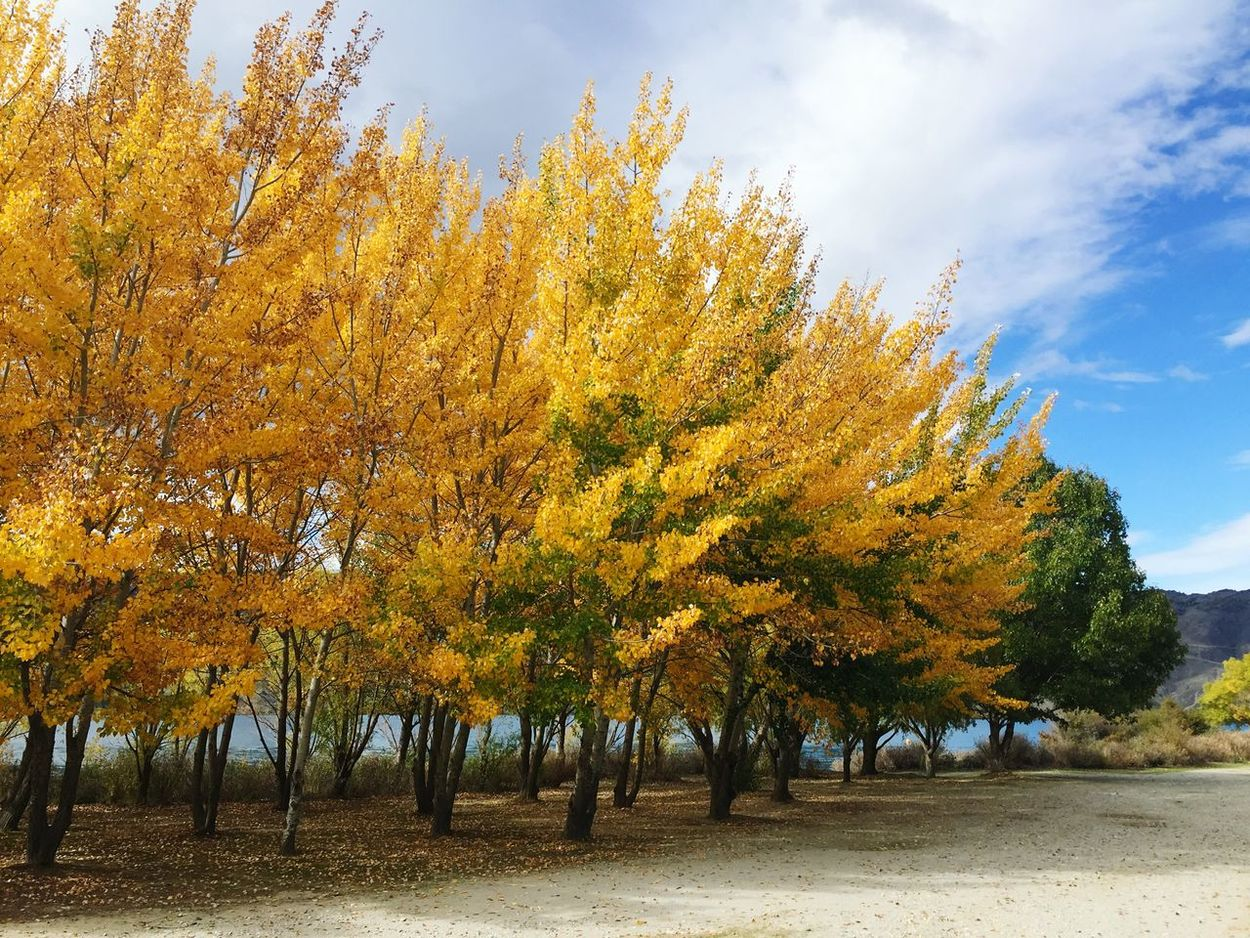 Autumn Colors Autumn Leaves Lake Dunstan Cromwell  Beautiful Nature Lakeside
